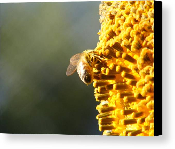 Bee Canvas Print featuring the photograph Too Bee Or Not To Be by Gail Salitui