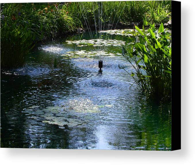 Pond Canvas Print featuring the photograph Tranquil Waters by Anne Cameron Cutri