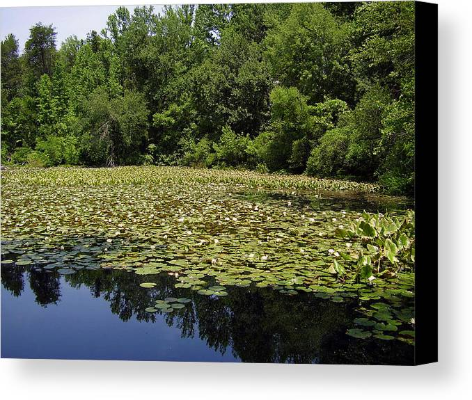 Tranquility Canvas Print featuring the photograph Tranquility by Flavia Westerwelle