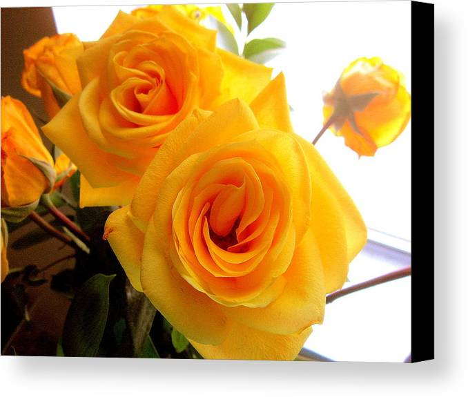 Two Canvas Print featuring the photograph Twin Roses by Abby Humphries