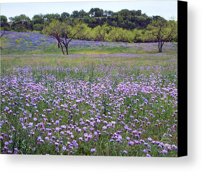 Wildflowers Canvas Print featuring the photograph Verbena And Blue Bonnet Landscape by Linda Phelps