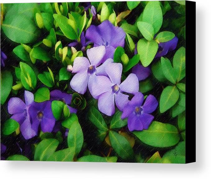 Vinca Canvas Print featuring the photograph Vinca by Sandy MacGowan