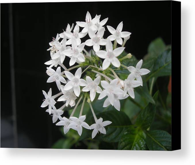 White Soul Canvas Print featuring the photograph Virgin Creation by Aim to be Aimless
