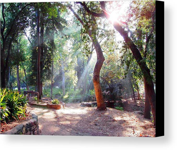 Spiritual Canvas Print featuring the photograph Walk In The Park by Randy Sprout