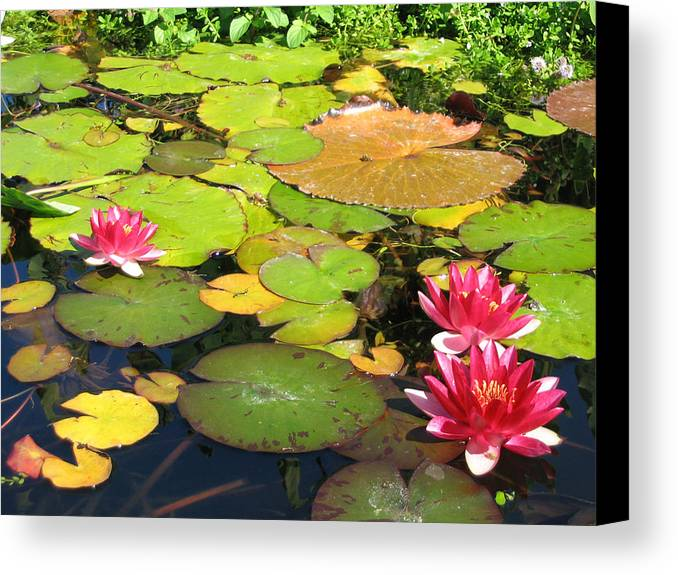 Travel Canvas Print featuring the photograph Water Lilies At San Juan Capistrano by Beverlee Singer