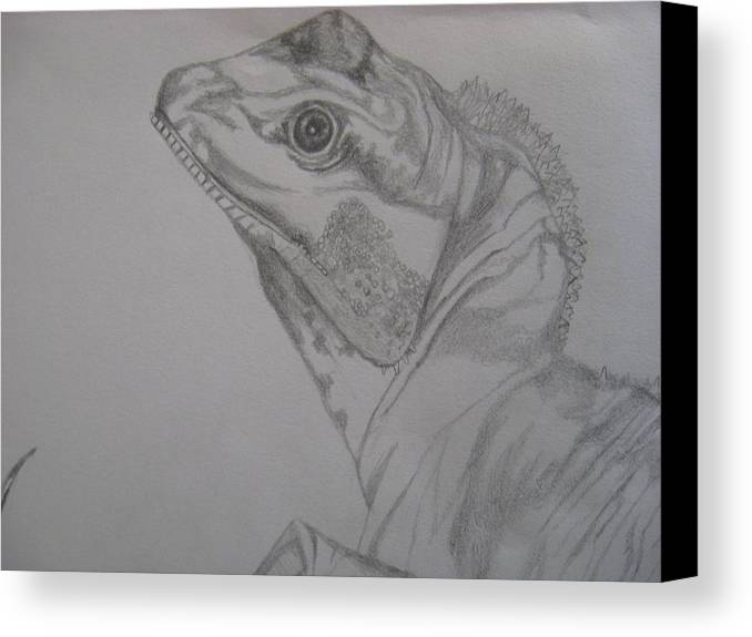 Dragon Canvas Print featuring the drawing Waterdragon Up Close by Theodora Dimitrijevic