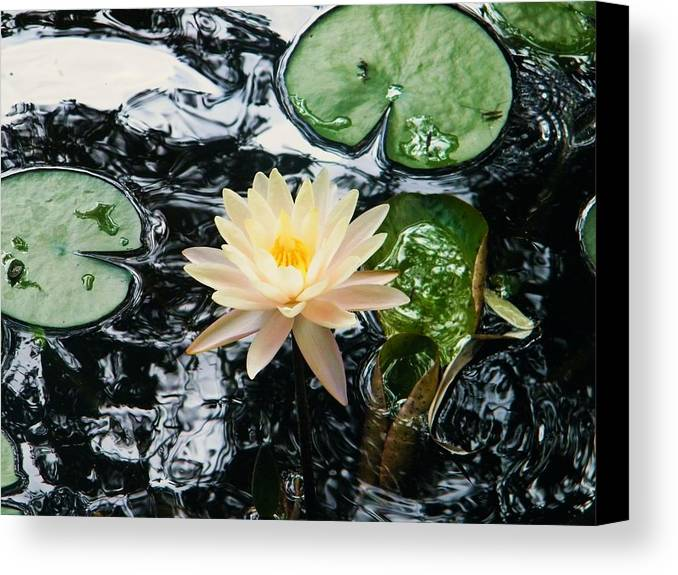 Beauty In Watter Churning. Canvas Print featuring the photograph Watter Churning by Nereida Slesarchik Cedeno Wilcoxon