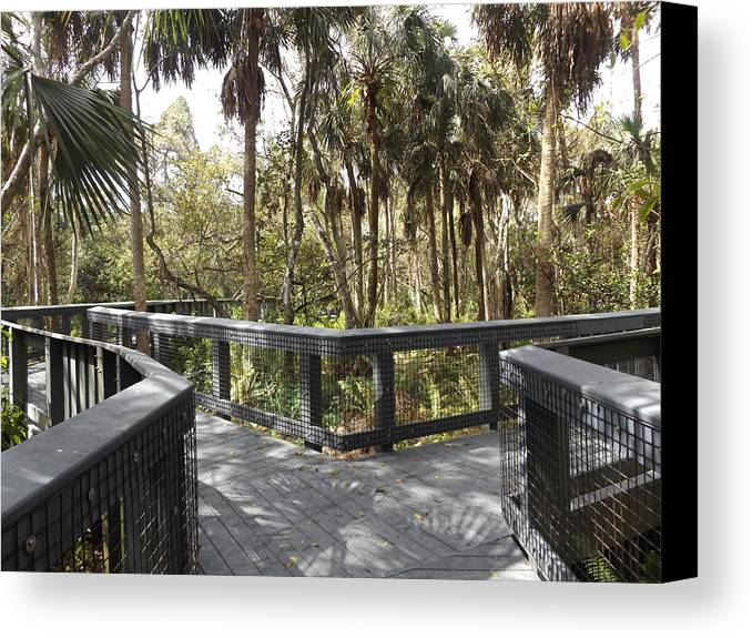 Boardwalk Canvas Print featuring the photograph Which Way ? by Shutter Print