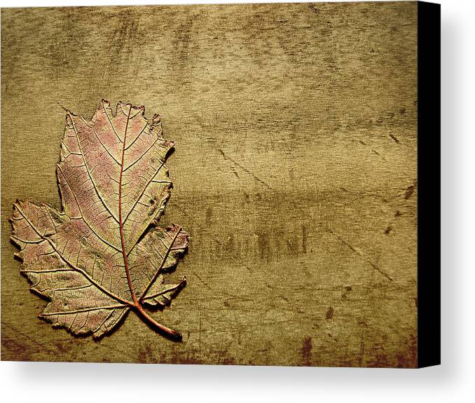 Autumn Canvas Print featuring the photograph ...while You Fall Apart by Dana DiPasquale