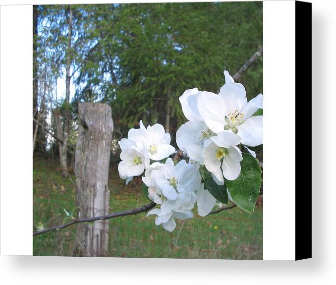 Flowers Canvas Print featuring the photograph White Flowers by Valerie Josi
