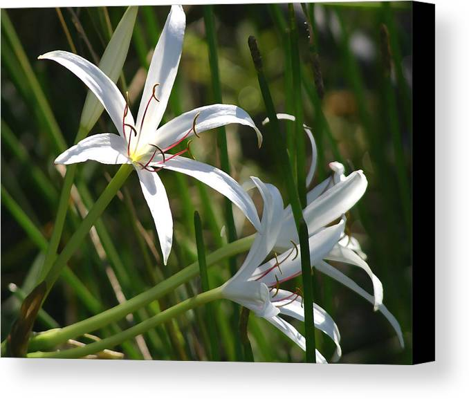 Lillies Canvas Print featuring the photograph White Lillies by Mary Haber