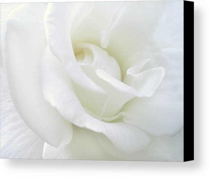 Rose Canvas Print featuring the photograph White Rose Angel Wings by Jennie Marie Schell