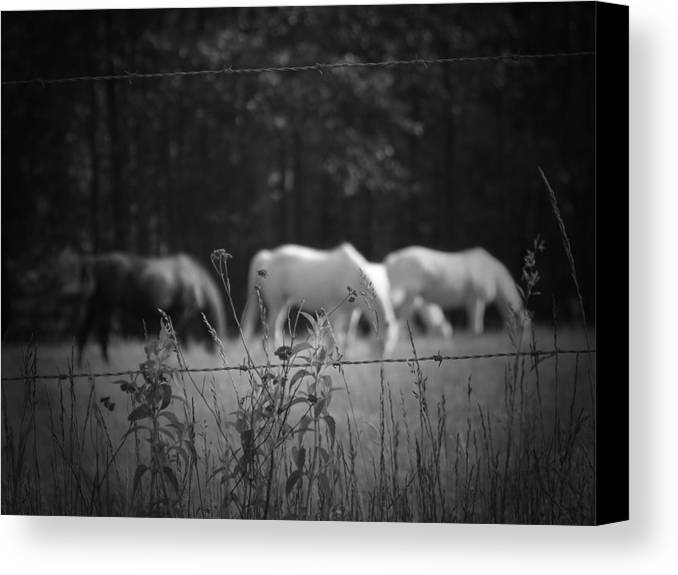 Horses Canvas Print featuring the photograph Wild Restraint by Jessica Burgett