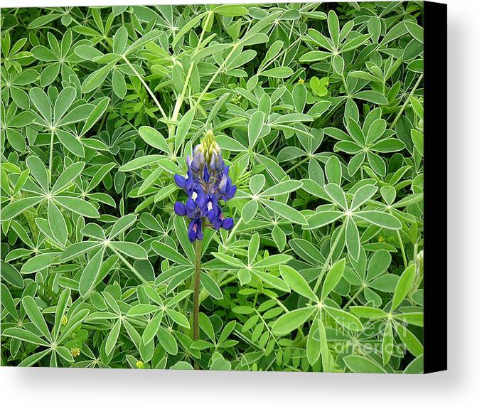 Nature Canvas Print featuring the photograph Wildflowers - All Alone And Blue by Lucyna A M Green