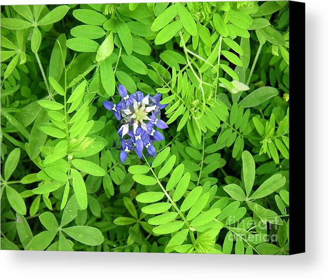 Nature Canvas Print featuring the photograph Wildflowers - Protective Detail by Lucyna A M Green