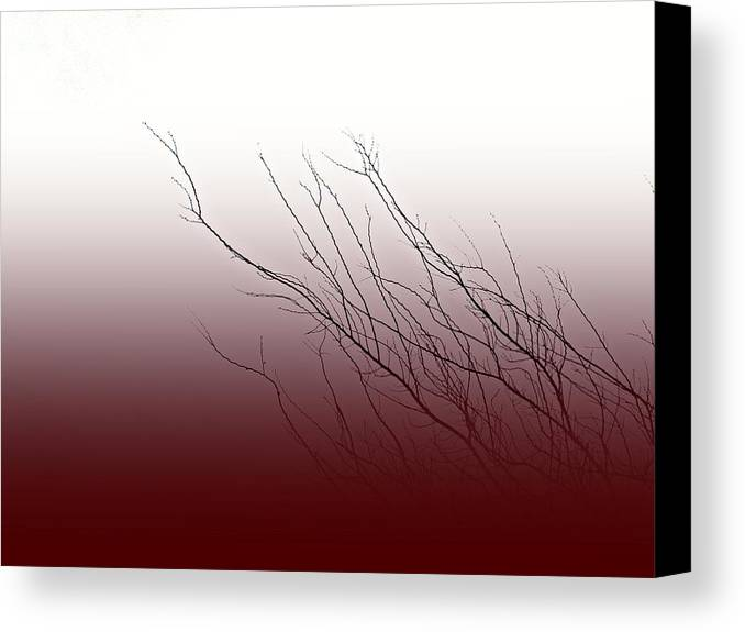 Branches Canvas Print featuring the photograph Wind In Your Hair by Sara Gaon