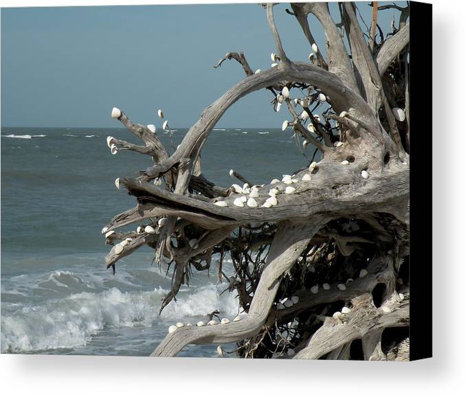 Driftwood Canvas Print featuring the photograph Windy Sea by Rosalie Scanlon