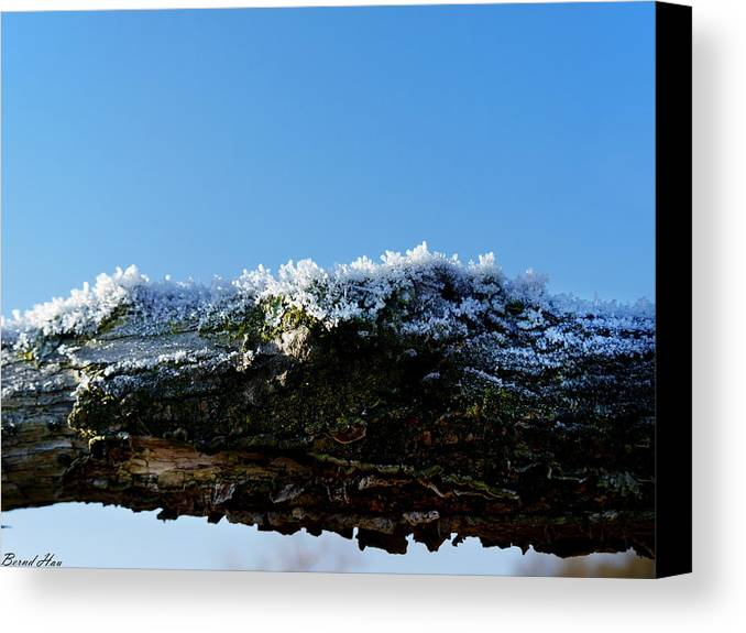 Canvas Print featuring the photograph Winter by Bernd Hau