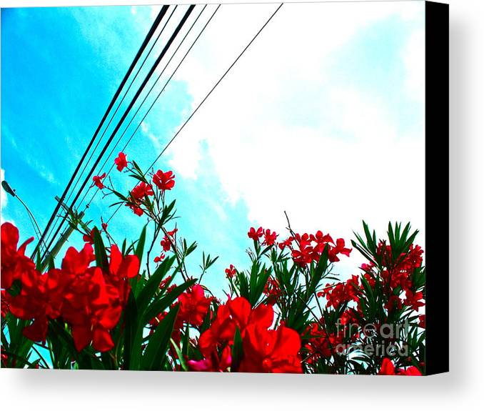 Flowers Canvas Print featuring the photograph Wire Flowers by Chuck Taylor
