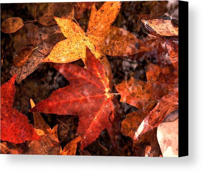 Leaves Canvas Print featuring the photograph With Love - Autumn Pond by Theresa Asher
