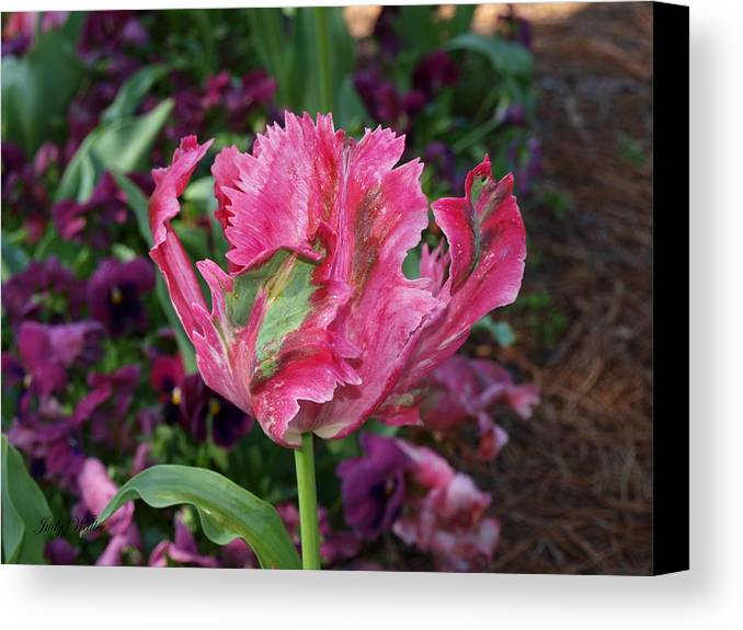 Blooming Canvas Print featuring the photograph Wow by Judy Waller