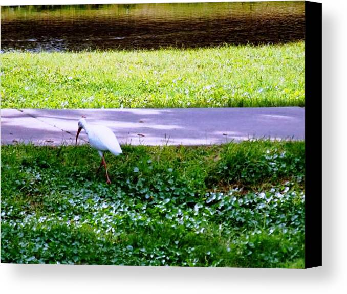 Bird Canvas Print featuring the photograph Woways Me by Rana Adamchick