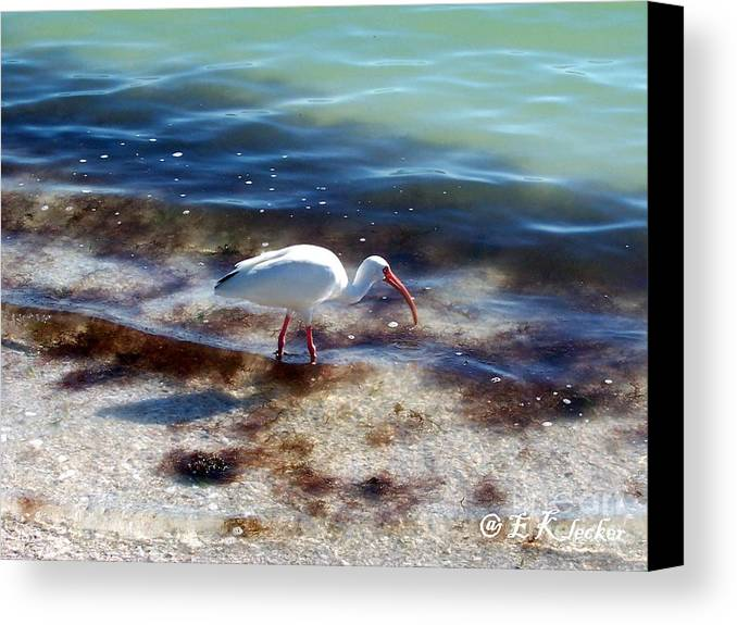 Bird Canvas Print featuring the photograph Yay Seaweed by Elizabeth Klecker