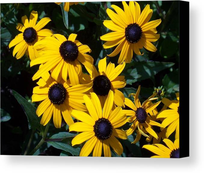 Yellow Flowers Canvas Print featuring the photograph Yellow Daisies by Ellen B Pate