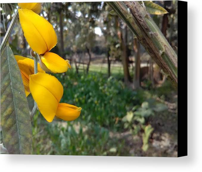 Canvas Print featuring the photograph Yellow Flower by Amit Kumar