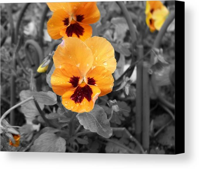 Flower Canvas Print featuring the photograph Yellow by Jessica Burgett
