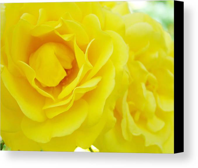 Rose Canvas Print featuring the photograph Yellow Roses Art Prints Botanical Giclee Prints Baslee Troutman by Baslee Troutman
