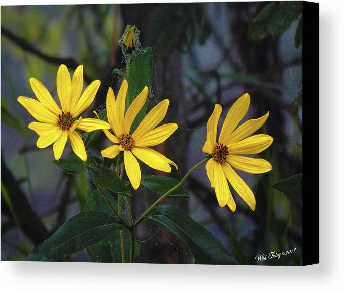 Summer Canvas Print featuring the photograph Yellow Trined by Wild Thing