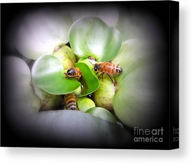 Honey Canvas Print featuring the photograph 1 . 2 . 3 . Honeybees by Renee Trenholm
