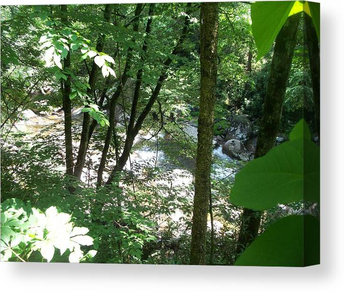 Landscape Canvas Print featuring the photograph Along The Stream by Rosanne Bartlett