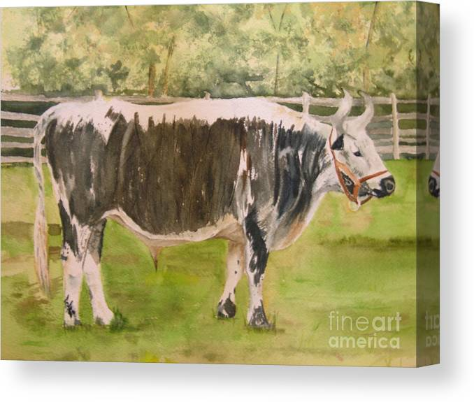 Bull Canvas Print featuring the painting Bill's Bull by Peggy Dickerson