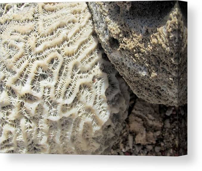 Coral Canvas Print featuring the photograph On The Beach by Kathy Briglio