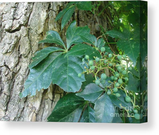 Tree Canvas Print featuring the photograph Wildwood Wonder by Paula Talbert
