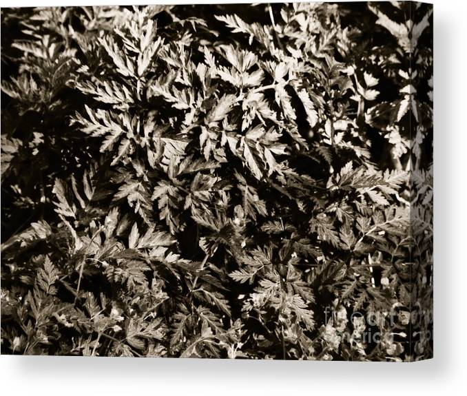 Leaf Canvas Print featuring the photograph Crowded by Gabriela Insuratelu