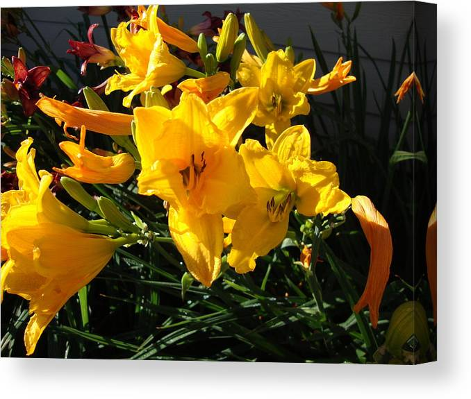 Flower Canvas Print featuring the photograph Flower In Idaho Falls by Iam Wayne
