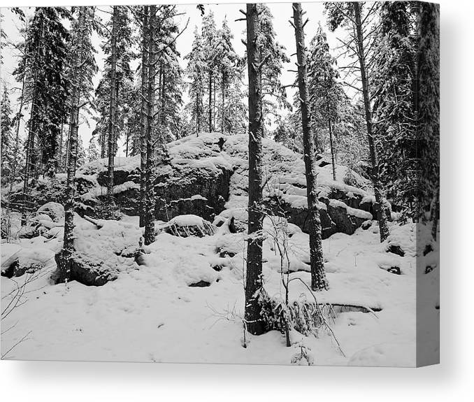 Finland Canvas Print featuring the photograph Pine Forest Winter by Jouko Lehto