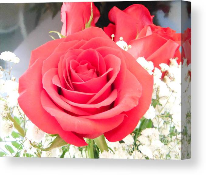 Anniversary Roses With Love Canvas Print featuring the photograph Anniversary Roses With Love 1 by Paddy Shaffer