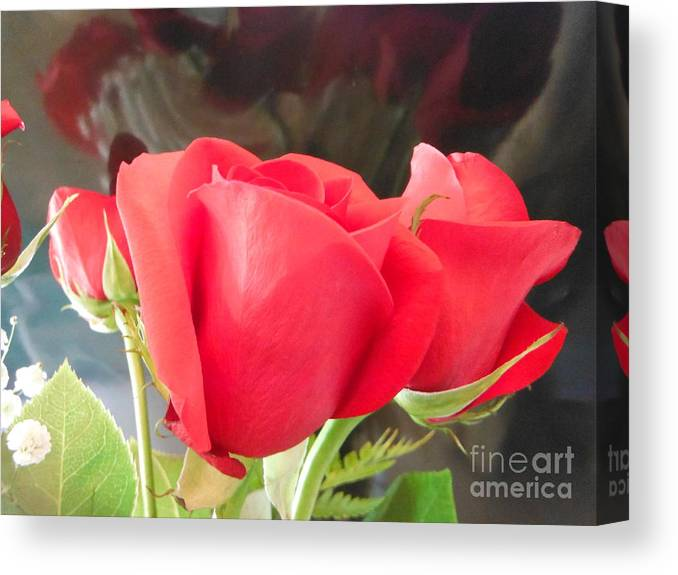 Anniversary Roses With Love Canvas Print featuring the photograph Anniversary Roses With Love 2 by Paddy Shaffer