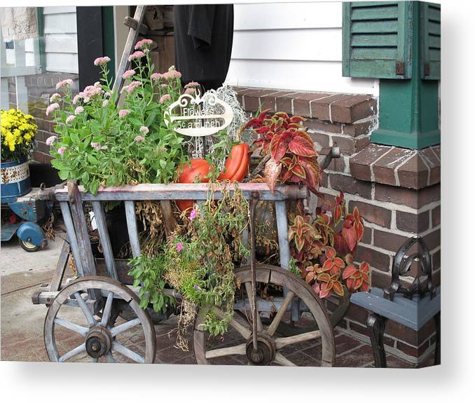 Antique Canvas Print featuring the photograph Antique Goat Cart by Barbara McDevitt