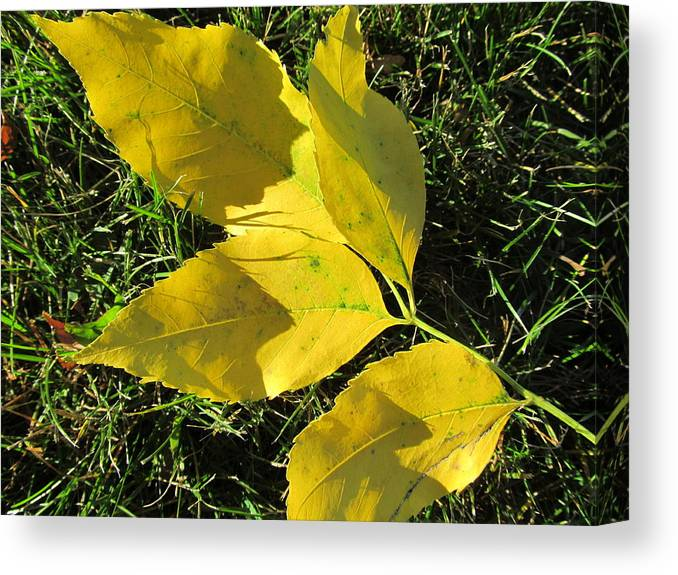 Leaves Canvas Print featuring the photograph Autumn Leaves by Tina M Wenger