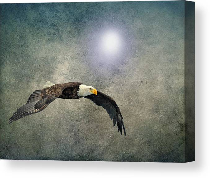 Eagle Canvas Print featuring the photograph Bald Eagle Textured Art by David Dehner