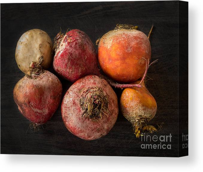 Agriculture Canvas Print featuring the photograph Beets In Different Colors On A Dark Background by Frank Bach