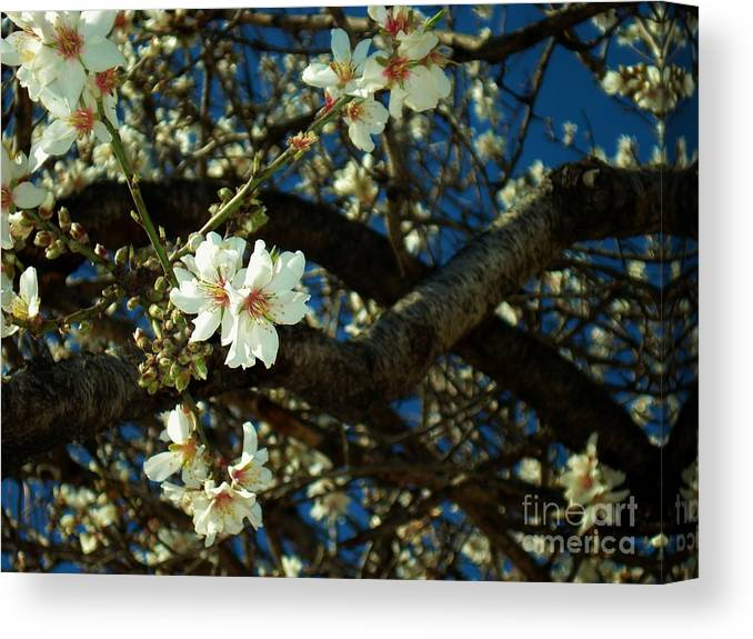 Flowers Canvas Print featuring the photograph Bittersweet by Linda De La Rosa