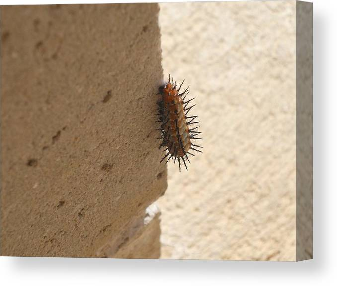Caterpillar Canvas Print featuring the photograph Caterpillar Pillar by Shelby Lawrence
