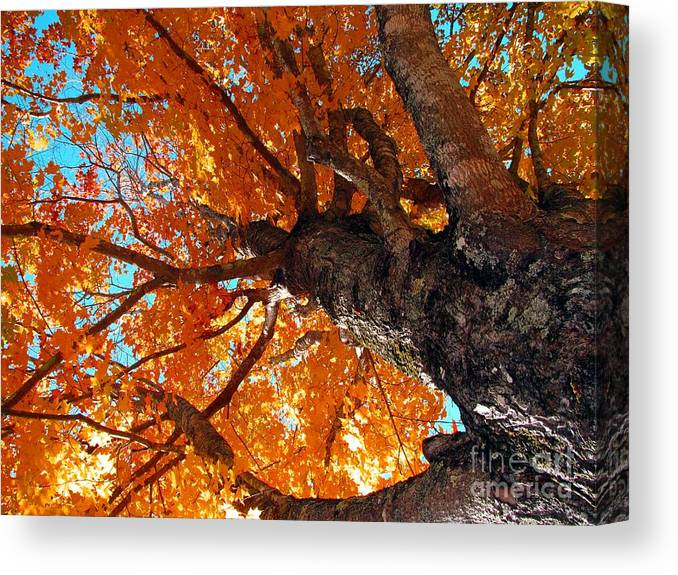 Colors Of Fall By Laurie Wilcox Photography Canvas Print featuring the photograph Colors Of Fall by Laurie Wilcox