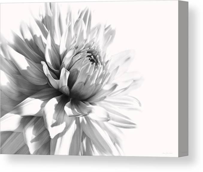 Dahlia Canvas Print featuring the photograph Dahlia Flower In Monochrome by Jennie Marie Schell